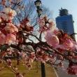 ◆ ことしも咲きは始めました