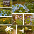 水辺公園に「はまゆう」が咲きました(H30.6.9)
