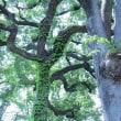 渋谷「松濤公園」