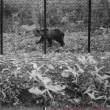 熊が・・・実は2017年9月17・18日開催予定でしたが・・・