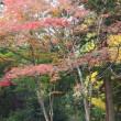 春日山神社のモミジ