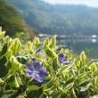 奥琵琶湖 春の花