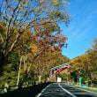 11月18日(日)のつぶやき 秋深し、六甲山の、紅葉樹 #関西出張 株式会社AD-CREATE