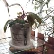 自作の植木鉢