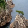 3651 山陰の松島
