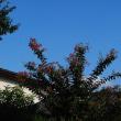 久々の青空と白い雲