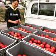 紅玉りんご初荷が届きました