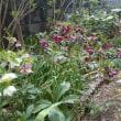 庭にも春を感じて✨