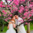 日本一早い桜祭り!! 2018年 1月22日