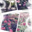 春日池公園♪
