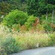 石川県境「白峰の紅葉」。