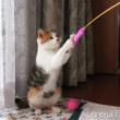 初めての猫じゃらし