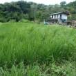 大地の再生&自然菜園コラボ講座8月(2日目:元水田を緑肥作物で畑化、苗代づくり、有機物マルチ)