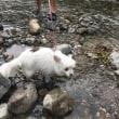 鹿沼で川遊び