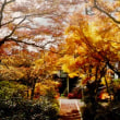 「今様」という新しい歌が生まれた場所 紅葉の名所圓興寺にて