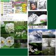 夏山フェスタで日本山岳写真協会の講演があるの巻