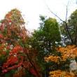 滋賀紅葉ツアー 3