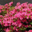 お花が沢山です(^-^)
