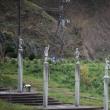 佐久間ダムの水仙(鋸南町)