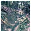 花崗岩のザラザラした道が続く登山道