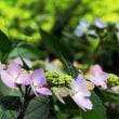 万博公園 6月の花