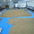 農園便り(稲の脱穀を終える)