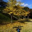 江汐公園の紅葉 part2