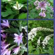 裏庭の花々
