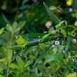 緑化センター季節の花めぐり