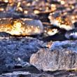 氷の宝石、朝景に輝く