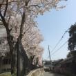 桜前線・・
