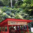 鷲子山上神社のアジサイ