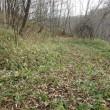 散策路の草刈り