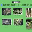武庫川の樹木6