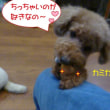 2018 11/12★今日は桃ちゃんとチャッピー君です★