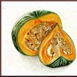 色鉛筆画406 (かぼちゃ)