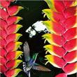 クレイジージャーニー 11月14日(水)アマゾンの動植物を撮る男