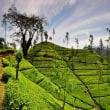 【国際交流】【スリランカ】【紅茶】【気候】