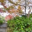 『関西花の寺 第十二番 久安寺虚空園』の紅葉