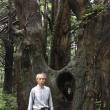トトロの木….小杉の大杉&幻想の森
