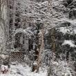 積雪3cm~弱い雪が降っています