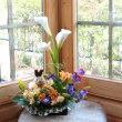 春の花  教室より♪