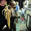 8/19(土):根魚・アコウ調子良くヒット!!夜はスルメが調子良くゲットもマイカは数釣り不調で型も小ぶりでした(_ _。)・・・シュン