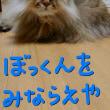 ちび日菜ちゃんとまっけんゆ〜?
