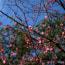 博多写景 承天寺の早春