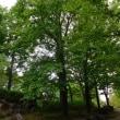 四季の森を散策