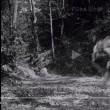 映画「羅生門」藪の中の真理は確率的にしか定まらない