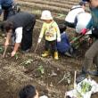 2018年5月12日 里山.com    サツマイモ植え付け スナップエンドウ収穫