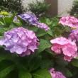 紫陽花の季節~