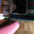 我が家の 猫の近況
